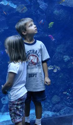 Aquarium wp 4