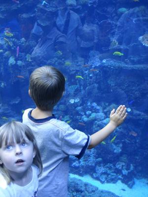 Aquarium wp 5
