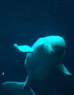 Aquarium wp